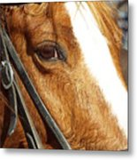 Those Big Brown Eyes Metal Print