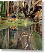 Those Eyes Frog Eyes Metal Print