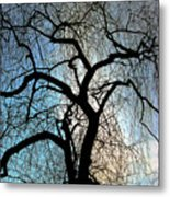 Those Gnarled Branches Metal Print