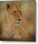 Thoughtful Lioness - Horizontal Metal Print