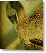 Thoughtful Pelican Metal Print