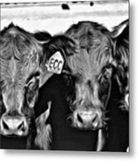 Three Amigos-2 Metal Print