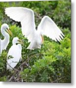 Three Birds Of A Feather Flock Together Metal Print