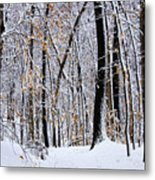 Three Creeks Conservation Area - Winter Metal Print