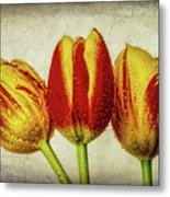 Three Dew Covered Tulips Metal Print