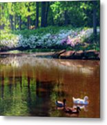 Three Ducks At The Azalea Pond Metal Print