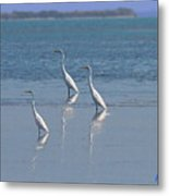 three Egrets Metal Print