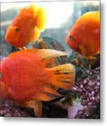Three Fish Metal Print
