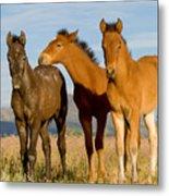 Three Foals Metal Print