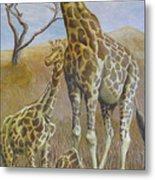 Three Giraffes Metal Print