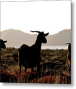 Three Goats Metal Print