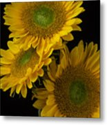 Three Golden Sunflowers Metal Print