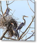 Three Herons Metal Print