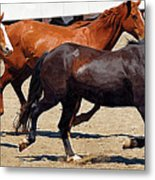Three Horses Galloping Metal Print