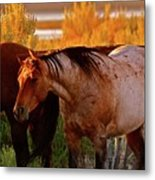 Three Horses Of A Suspicious Corral Metal Print