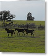 Three Horses Metal Print by Rebecca Cearley