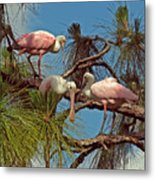Three In A Tree Metal Print