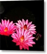 Three Night Lilies  Metal Print