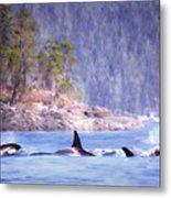 Three Orca Whales Metal Print
