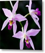Three Orchids Metal Print