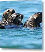 Three Otters Metal Print