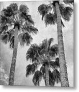 Three Palms Bw Palm Springs Metal Print