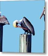 Three Pelicans Metal Print