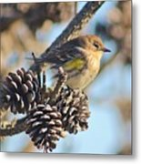 Three Pine Cones And A Little Bird Metal Print