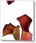 Three Rust Calla Lilies Metal Print