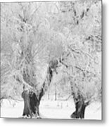 Three Snow Frosted Trees In Black And White Metal Print