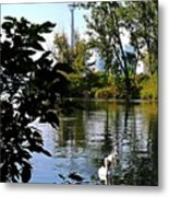 Three Swans And The Cn Tower Metal Print