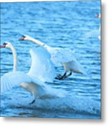 Three Swans Metal Print