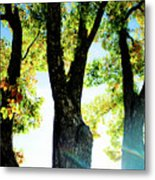 Three Tree Light Metal Print