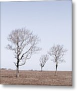 Three Trees - Nantucket Metal Print