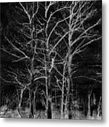 Three Trees In Black And White Metal Print