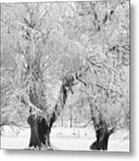 Three Trees In The Snow - Bw Fine Art Photography Print Metal Print