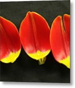 Three Tulip Petals Metal Print