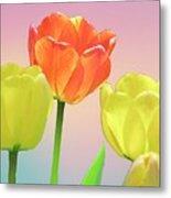 Three Tulips. Metal Print
