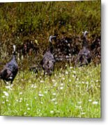 Three Turkeys Metal Print