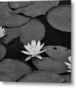 Three Water Lilies  Metal Print