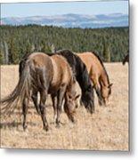 Three Wild Mustangs Metal Print