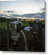 Three Wisconsin Maidens Metal Print