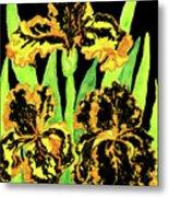 Three Yellow-black Irises, Painting Metal Print