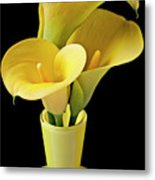 Three Yellow Calla Lilies Metal Print by Garry Gay