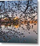 Through The Cherry Tree Metal Print