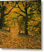 Through The Fallen Leaves Metal Print