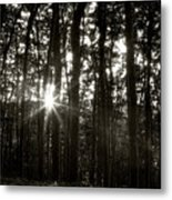Through The Forest 4 Metal Print