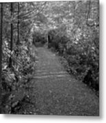 Through The Forest Canopy Black And White Metal Print