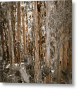 Through The Forest Trees Metal Print