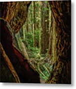 Through The Knothole Metal Print